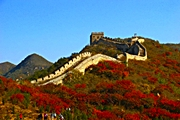 Trees and plants with multicolored leaves in front of the Great Wall of China at Badaling near Beijing