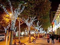 Christmas lights adorn trees on a Shanghai commercial street