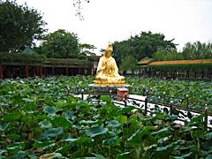 A gold Buddha statue amongst lotus pads in Baomo Garden in the Panyu District of Guangzhou, China