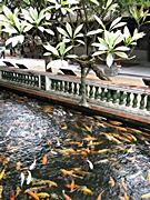A koi pond in Baomo Garden in the Panyu District of Guangzhou, China