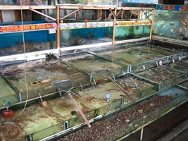 Seafood tanks at a restaurant on Hong Kong's Cheung Chau Island