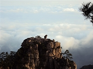 Huangshan - mountain peak and clouds - Tina Chen - 187 x 140
