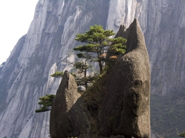 A small tree grows atop a pointed rock formation, with an enormous cliff in the background, in Huangshan (黄山, Yellow Mountain), China