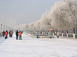 Ice rime-covered trees in Jilin City (吉林市), China