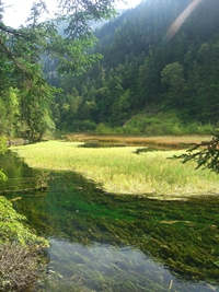 Thick vegetation growing on the bottom of Grass Lake in Jiuzhaigou (九寨沟), Sichuan Province, China