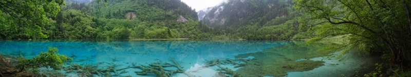 A panoramic view of Wuhua Hai ('Many-Colored Lake') in Jiuzhaigou (九寨沟), Sichuan Province, China