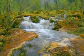 A forest stream in Jiuzhaigou (九寨沟), Sichuan Province, China
