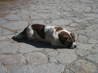 a dog sunbathing at Jade Dragon Snow Mountain, Lijiang, China