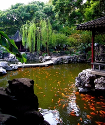 A koi pond with traditional Chinese landscaping at Yuyuan Gardens in Shanghai, China
