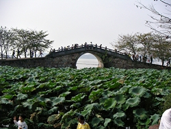A bridge and lotus pads at Lake Tai's Turtle Head Isle near Wuxi (无锡), China