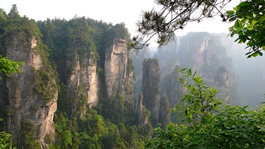 Vivid green vegetation and karst formations in the Backyard Garden (Houhuayuan) area of Zhangjiajie (张家界), Hunan Province, China