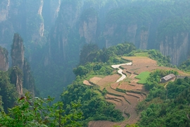 Terraced fields among the karst (limestone) peaks and cliffs of Zhangjiajie (张家界), Hunan Province, China