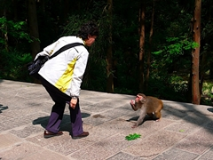 A tourist feeds a monkey in Zhangjiajie (张家界), Hunan Province, China